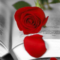 Rose-rouge-et-livre-ouvert-copyright-Generalitat-de-Catalunya