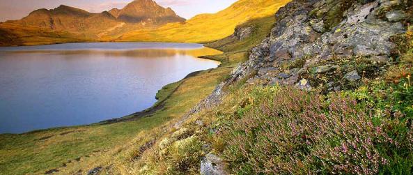Bruyère commune en fleur sur le pic Palimèra. Dans le fond, le Tuc Mauberne, Val d'Aran (Copyright : Oriol Alamany)