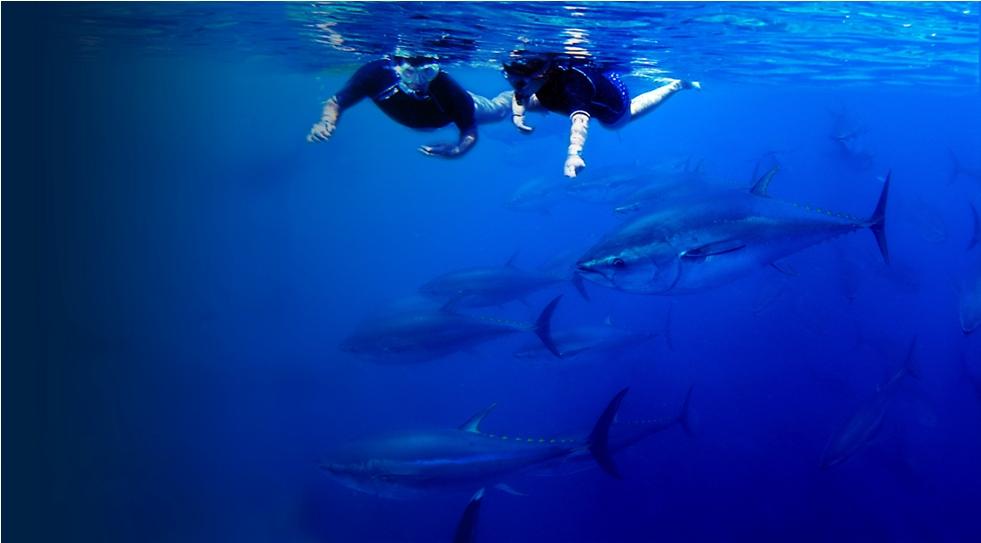 Nage avec les thons... avec GrupBalfegó