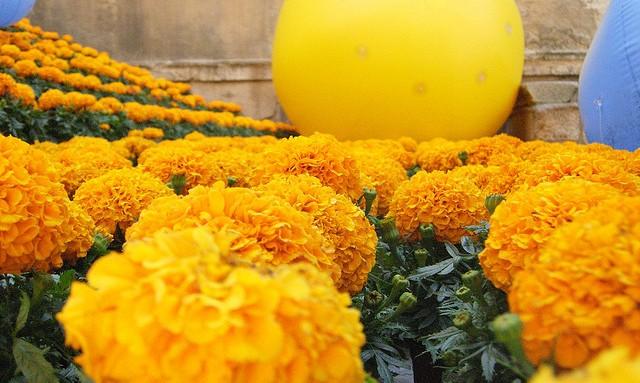Gérone-Fête-des-fleurs