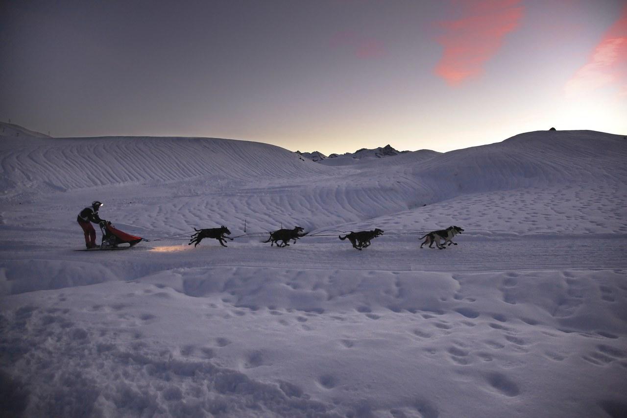 Un musher et son attelage, chiens de traineaux sur le plateau de Baqueira Beret