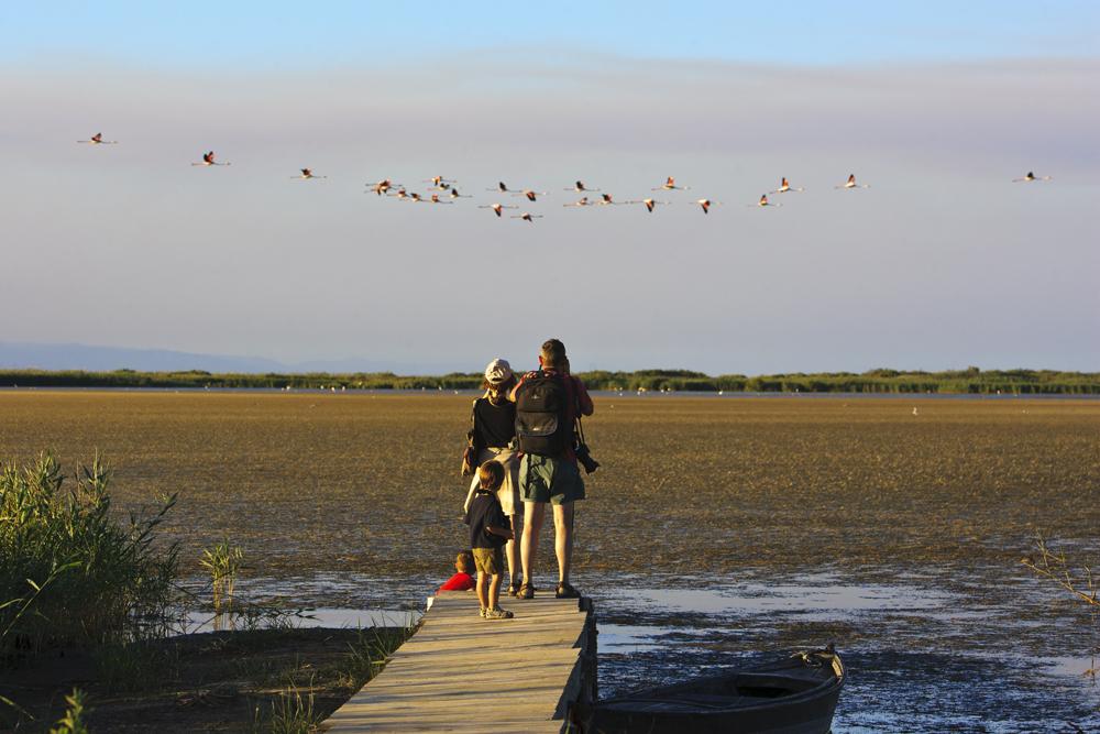 Observation des oiseaux. Crédit photo: Patronat de Turisme de Terres de l'Ebre