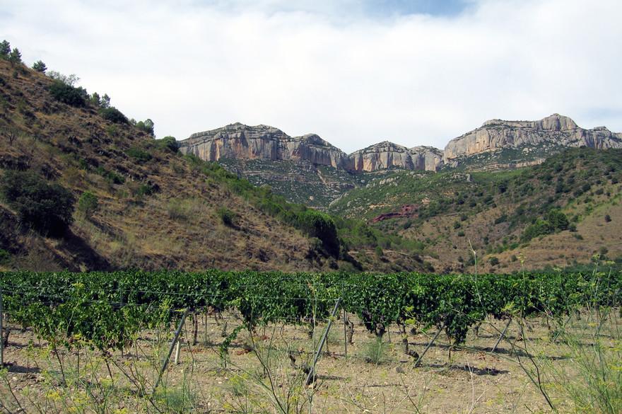 Vigne sur les pentes de la sierra de Montsant - wikipedia
