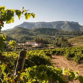 Cellers Sant Rafel, detalle de los viñedos con la bodega y la montaña La Mola de fondo (Marc Castellet)