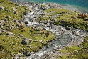 Ruisseau à l'étang de Cavallers