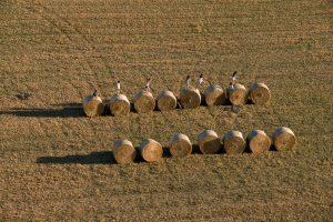 Champ de blé à Palau-sator