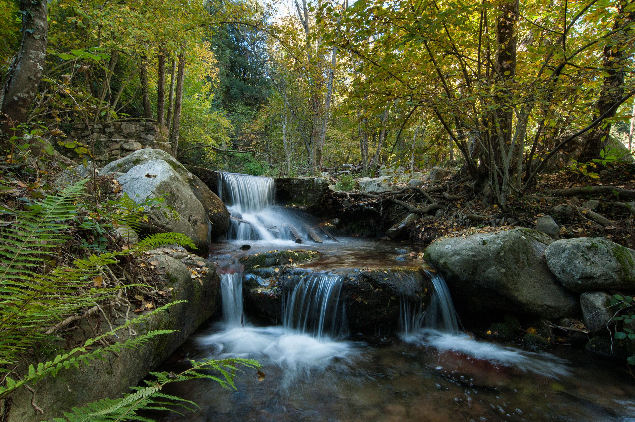 Rivière au coeur de la forêt de Montseny