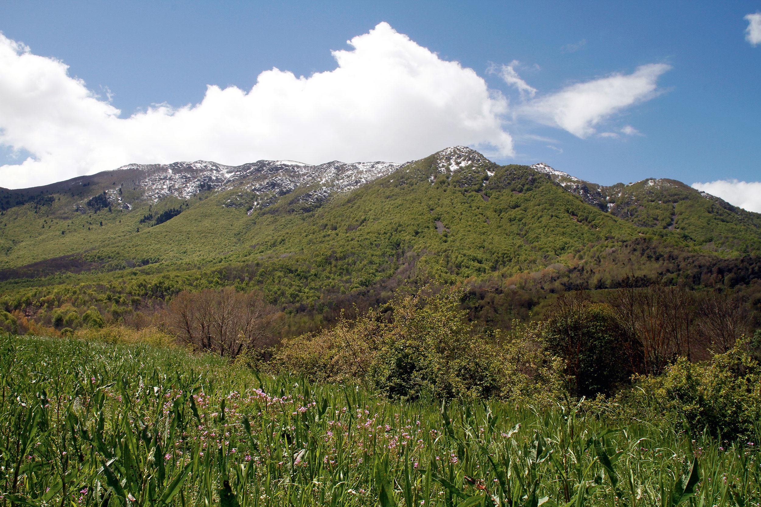Paysages du Parc Naturel de Montseny, réserve de la biosphère.