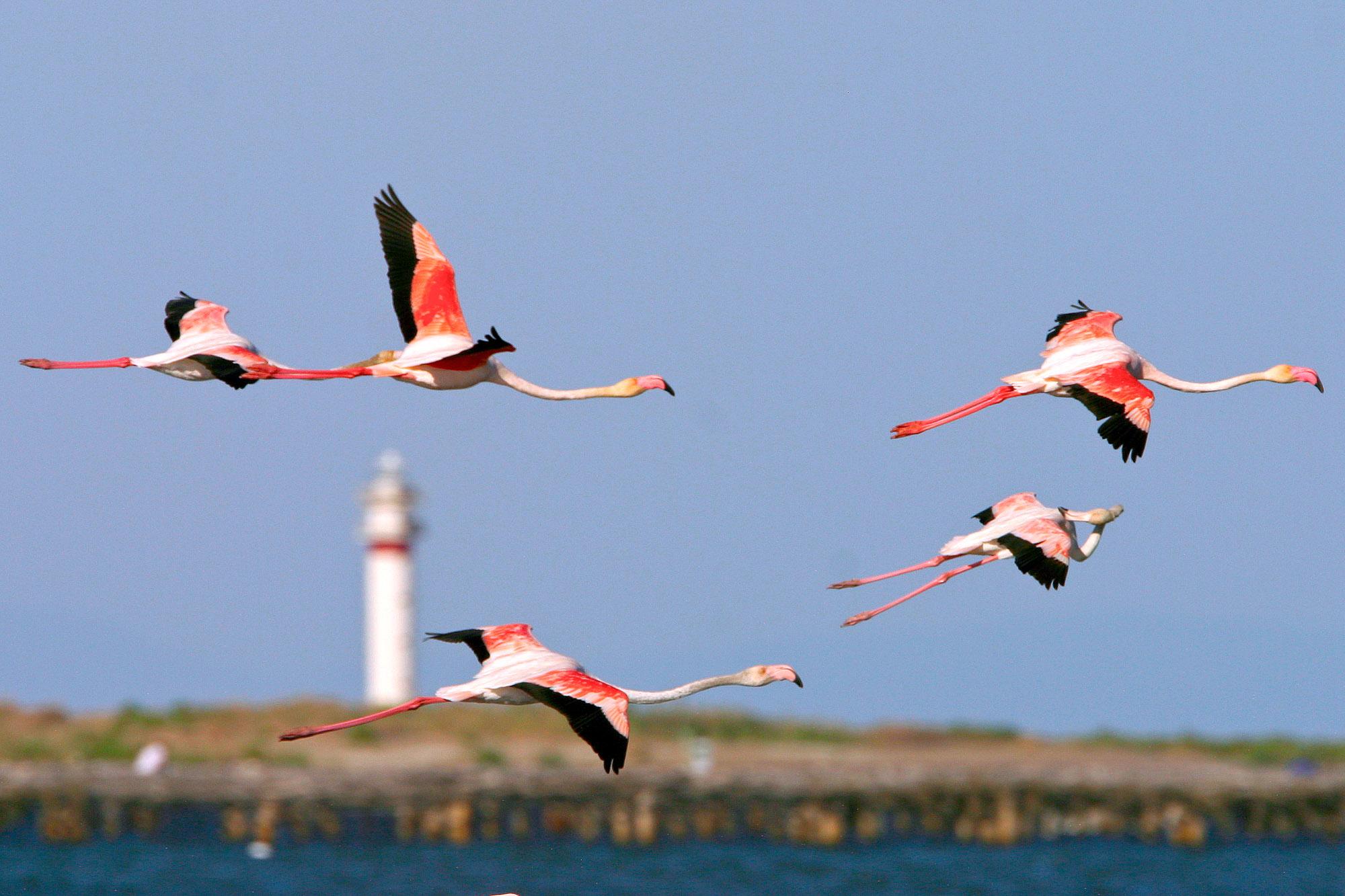Ici La Terre Se Mlange Leau Pour Crer Un Environnement Idal Les Oiseaux Que Lon Clbre Au Cours Du Delta Birding Festival 21