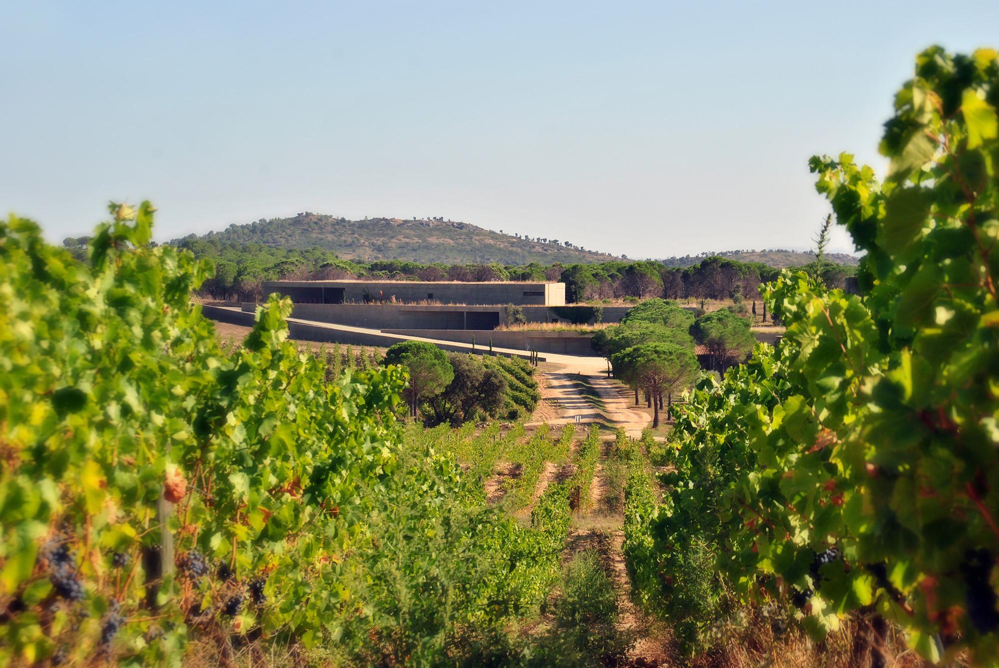 Les Vignobles de Terra Remota.