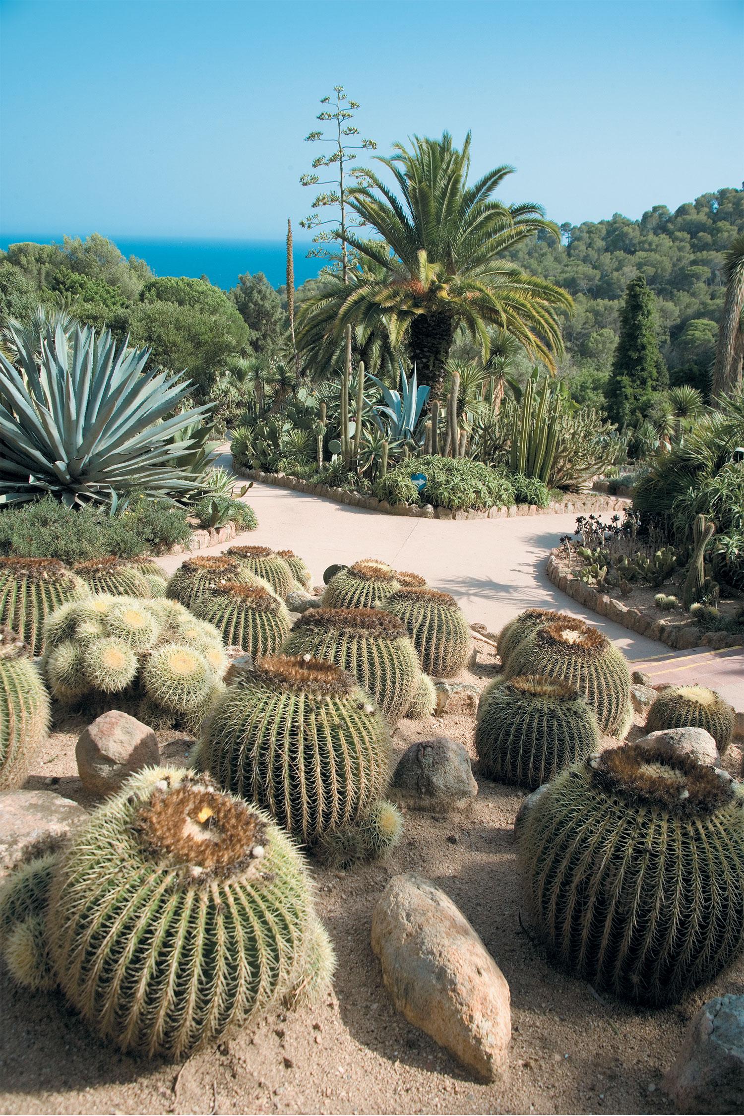 Costa brava jardins botaniques marimurtra botanical gardens - Le Jardin Botanique De Pinya De Rosa Georama