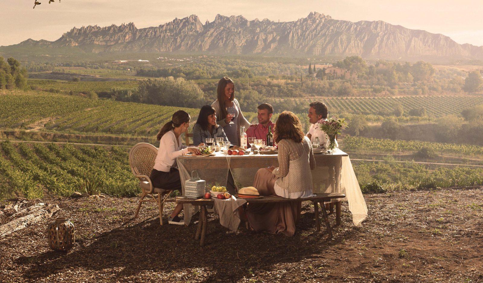 Les Vignes de Catalogne