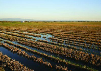 Découvrir le riz du Delta de l'Ebre lors des festivals de plantation et de moisson