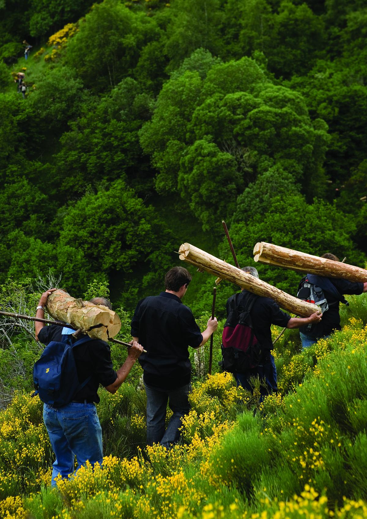 Transport de troncs pour les Falles