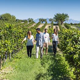 Les Vins Torres vous dévoilent leurs expériences originales