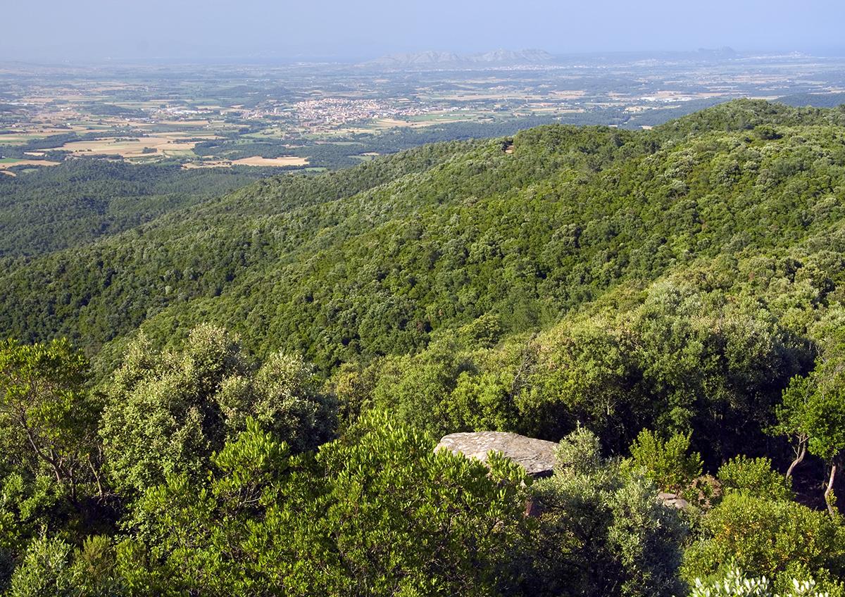 Serra de les Gavarres