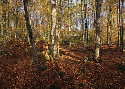 Menu d'automne