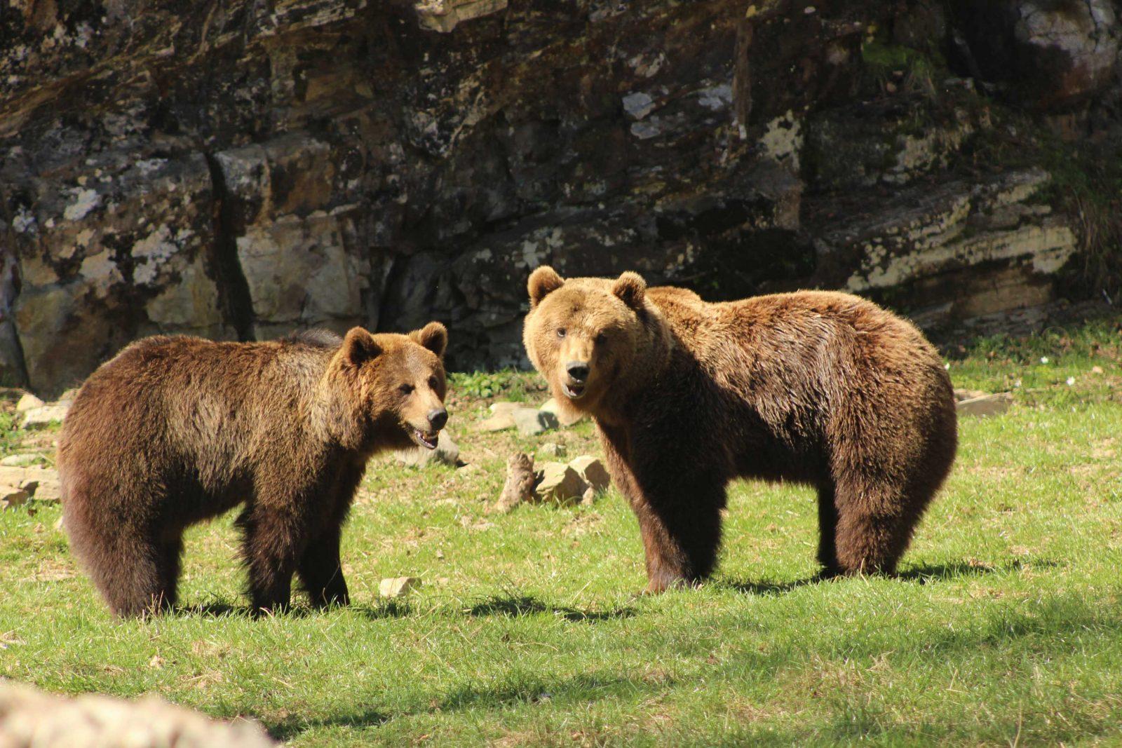 Vivez une aventure au plus près des animaux sauvages à Aran Park