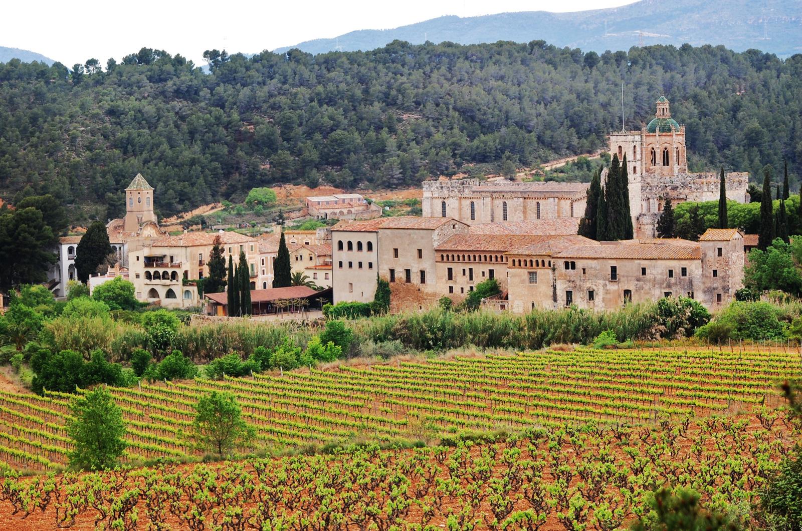 Vignobles au pied du monastère