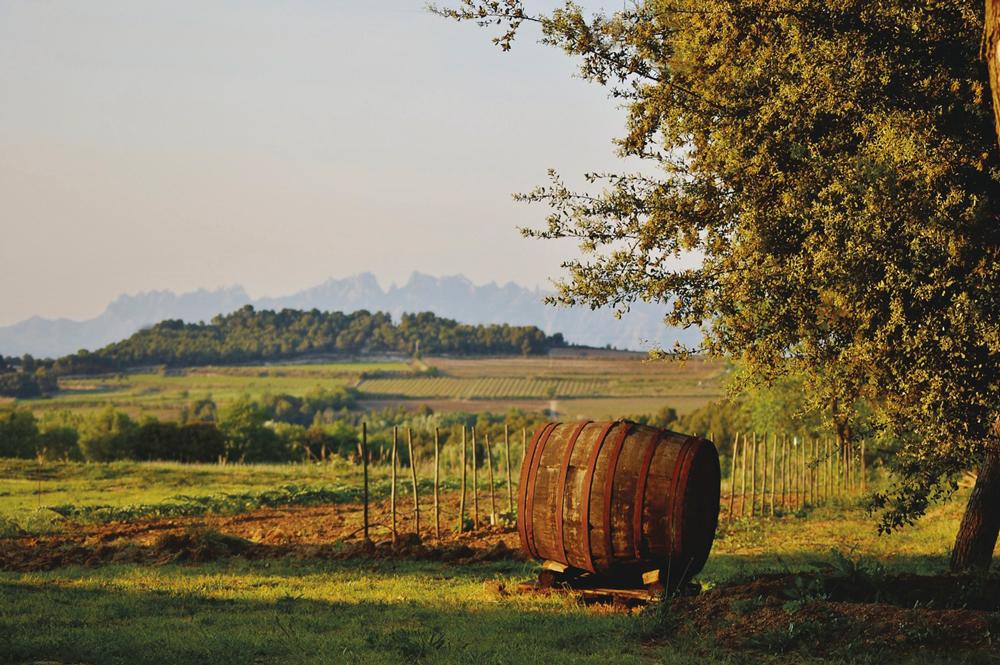 Route des vins de Penedès