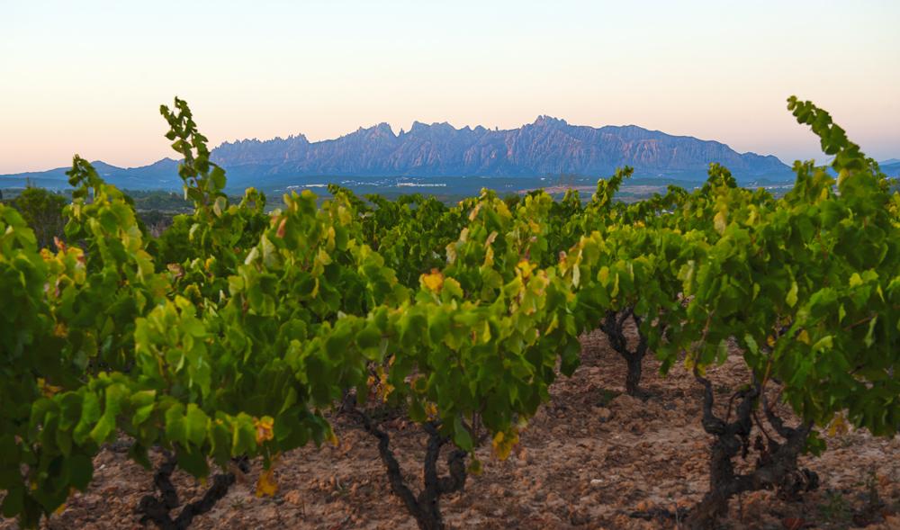 Vignes de Montserrat
