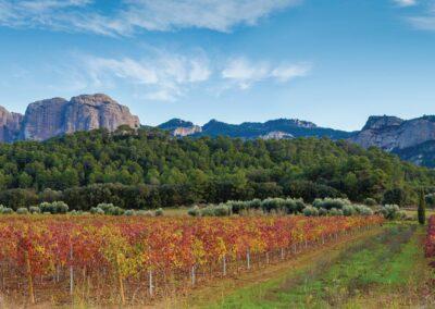 Visitez la Terra Alta, en Catalogne sud