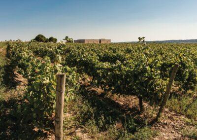 La Route des vins de l'Empordà en 8 activités
